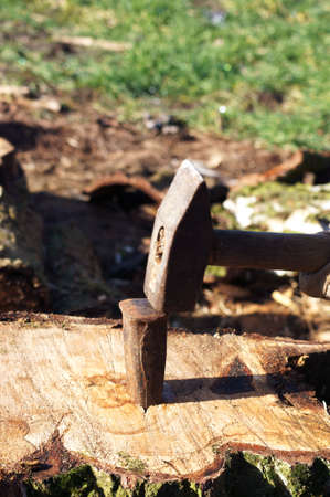 clout: A wooden wedge was beaten into a wooden trunk with a hammer.