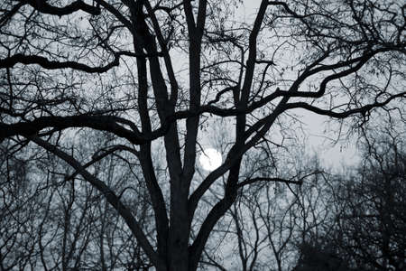 thicket: The bright full moon shines through the thicket of a tree with bare branches.