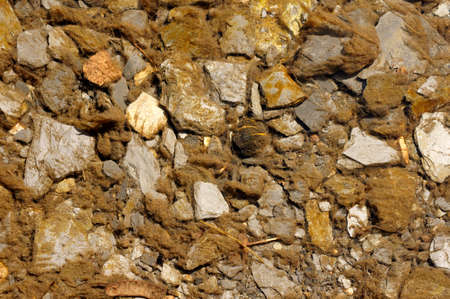 plantas acuaticas: Una corriente con plantas de agua de sedimentos y piedras en el agua limpia.