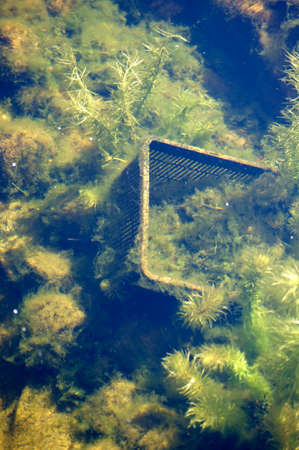 sediments: The underwater world of waters with sediments, aquatic plants and an old basket. Stock Photo