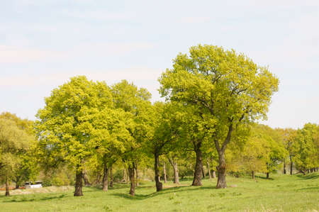 alluvial: A number of deciduous trees is surrounded by a hilly meadow landscape.