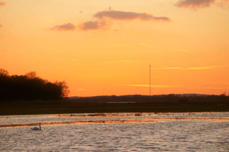 recorded: A swan swims during a sunset on a river. Recorded on the Elbe, a nature reserve on the Elbe.