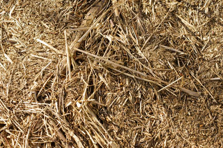 waste products: The closeup of twigs, and dried Driftwood and reeds on the banks of a river.