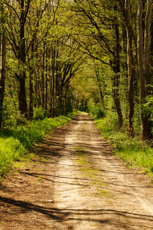 clearing the path: Light breaking through the crowns of a mixed forest and creates shades on the forest path. Stock Photo