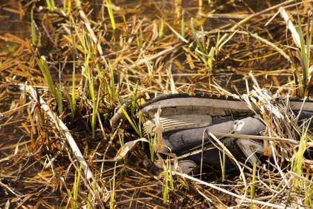 exploited: An old exploited sports shoe lies on the banks of a river.