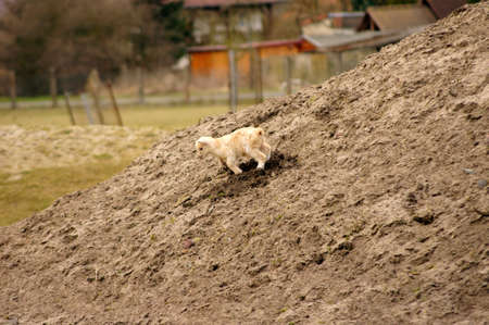 hircus: A mischievous and playful kid or lamb playing in a pile of sand.