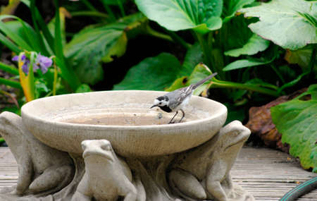 white wagtail: A white wagtail is in a clay jug with animal ornaments.