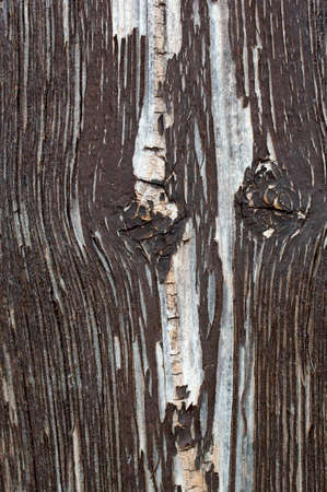 chipped paint: The closeup and top view of the chipped paint and texture of an old wooden board.