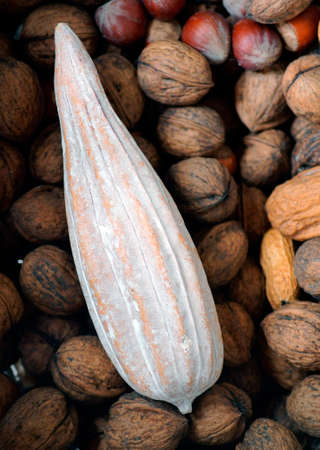 cocoa fruit: The top view of a dried cocoa fruit, hazelnuts and walnuts. Stock Photo