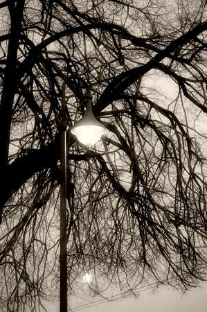 nostalgic: The moon hidden behind the branches of a tree with an old nostalgic street lamp.