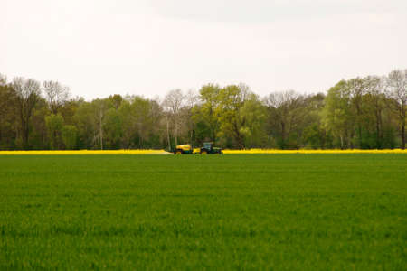 fertilize: A tractor spraying a canola field with chemical fertilizers.