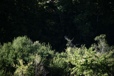 thicket: The close-up of the dark thicket of bushes and trees. Stock Photo
