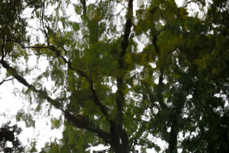 irregular shapes: The abstract photograph of leaves roof and the treetop of a tree in the water.