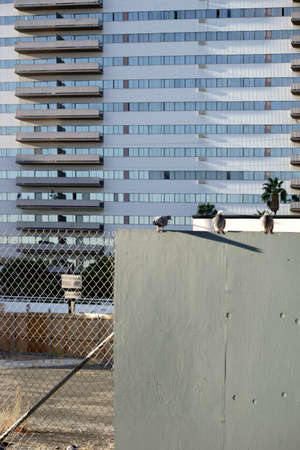 demarcation: On a wall with a fence sitting three pigeons. In the background is a modern residential building with balconies.