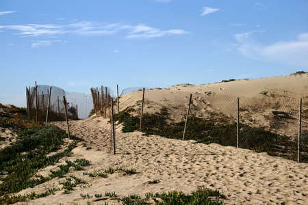 trample: A fenced path with trample tracks leading over the dunes to the beach.