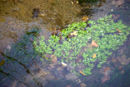 sediments: A stream with sediments, water plants and stones in clear water.