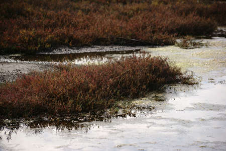 marshy: A marshy and swampy saltmarsh meadow with herbs and grasses near the sea.