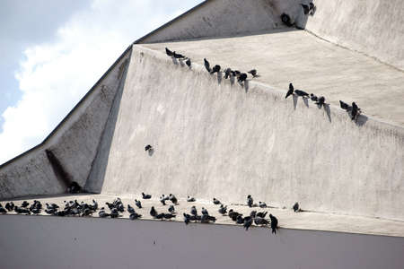 striking: A group of many pigeons sitting on a striking roof. Stock Photo