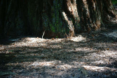 underbrush: From weak sunlight illuminated underbrush of a conifer. Stock Photo