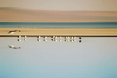 A small flock of birds from a breeding colony Gulls standing in series at the Salton Sea in California.