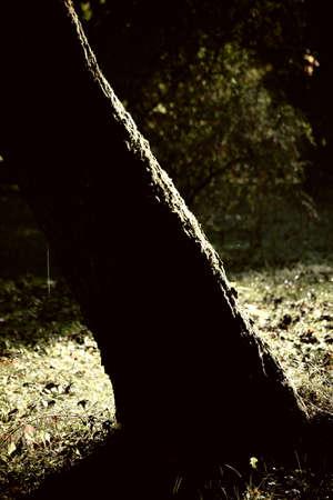 underwood: Underwood of a red maple tree illuminated by low sunlight. Stock Photo