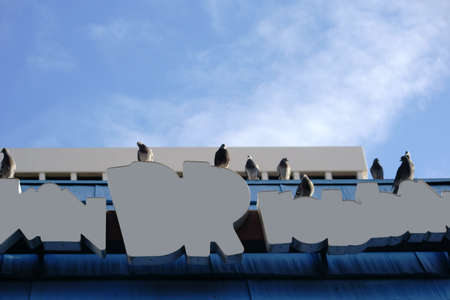 head tilted: A group of pigeons sits on a sign at the roof edge. Stock Photo