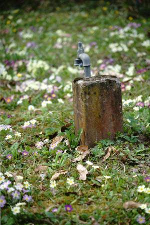 mit: Eine Blumenwiese inmitten eines Parks mit einem Wasseranschluss und Wasserhahn.