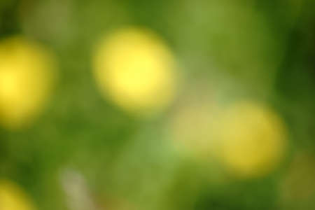 A blurred photographed flower bed with lens flare like shapes and patterns.