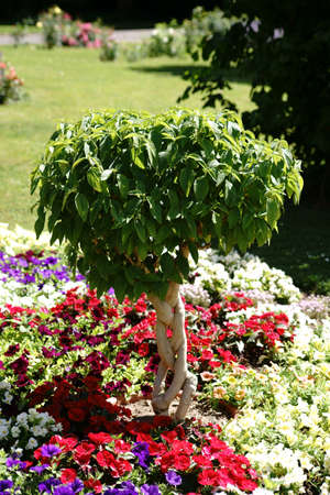 A small ornamental tree stands in the middle of a colorful garden bed with different flowers.