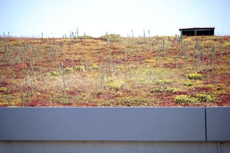 planted: A roof planted with soil plants.