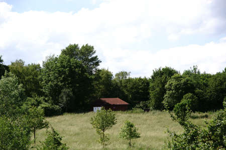 A hut is surrounded by trees and bushes on a forest edge.
