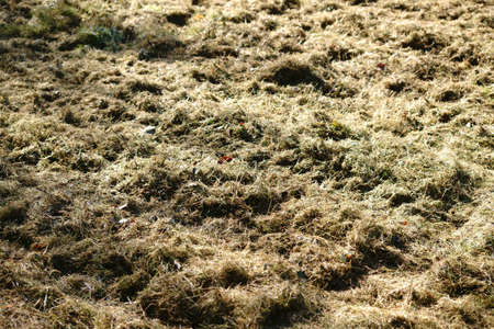 Freshly mown grass spread in sunlight to dry.