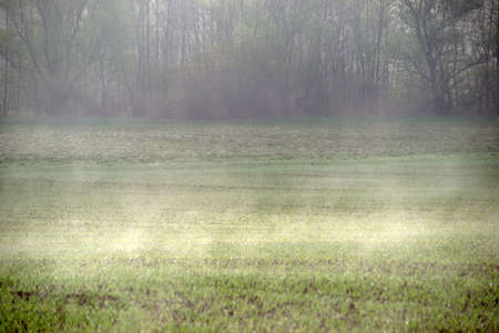 A wet meadow condenses in sunlight in light fog.