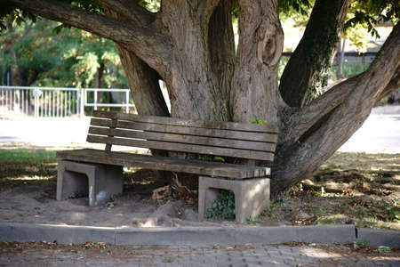 A park bench stands on the gnarled tree trunk of an old tree.