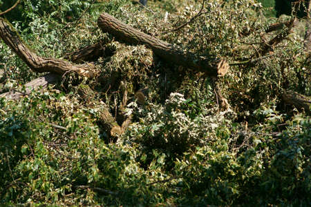A pile of sawed branches, twigs and trees after a storm. Stockfoto