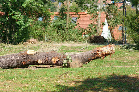 A sawed tree trunk in the middle of a city park after a storm.
