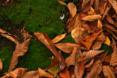Dry autumn leaves lie on a moss bed.