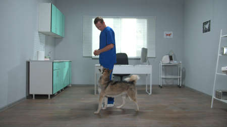 Vet in uniform trains a dog in cabinet Banco de Imagens