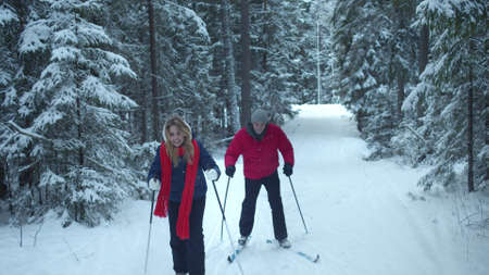 Novice skiers walk in the spruce forest