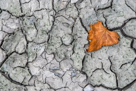 foglia: Textures  cracked mud