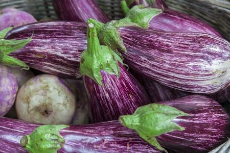 Eggplant purple variegated with turnips
