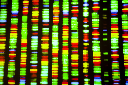 adn humano: Secuencia de ADN