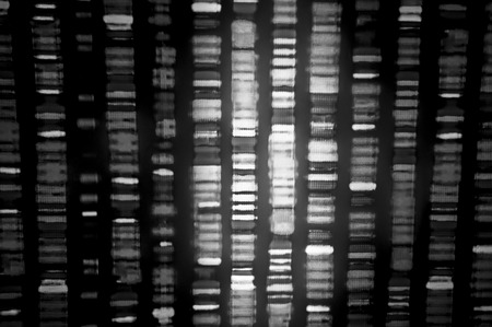 human evolution: DNA sequence in black and white Stock Photo