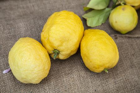 organically: Yellow lemons organically grown