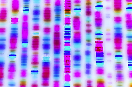 genomic: DNA sequence: graphic representation