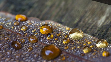 Colored dew drops on fallen leaves