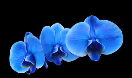 Photo illustration first floor Blue electric flower orchid Stock Photo