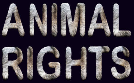 animal rights phrase written in capital letters with fur inside. concept for animalism, vegan life, ethical, nonviolence, activism Imagens