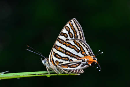 naturel: Butterfly in Thailand Stock Photo