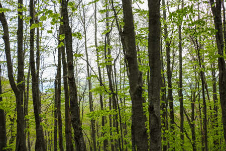 thicket: View on green forest thicket in daylight Stock Photo